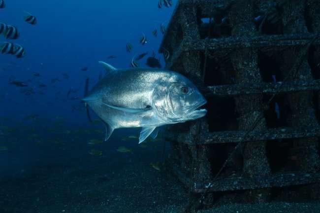 Les récifs artificiels se distinguent en trois types. © CRPM