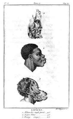 Planche extraite de l'ouvrage « Histoire naturelle du genre humain » par Julien Joseph Virey (Paris, 1801).