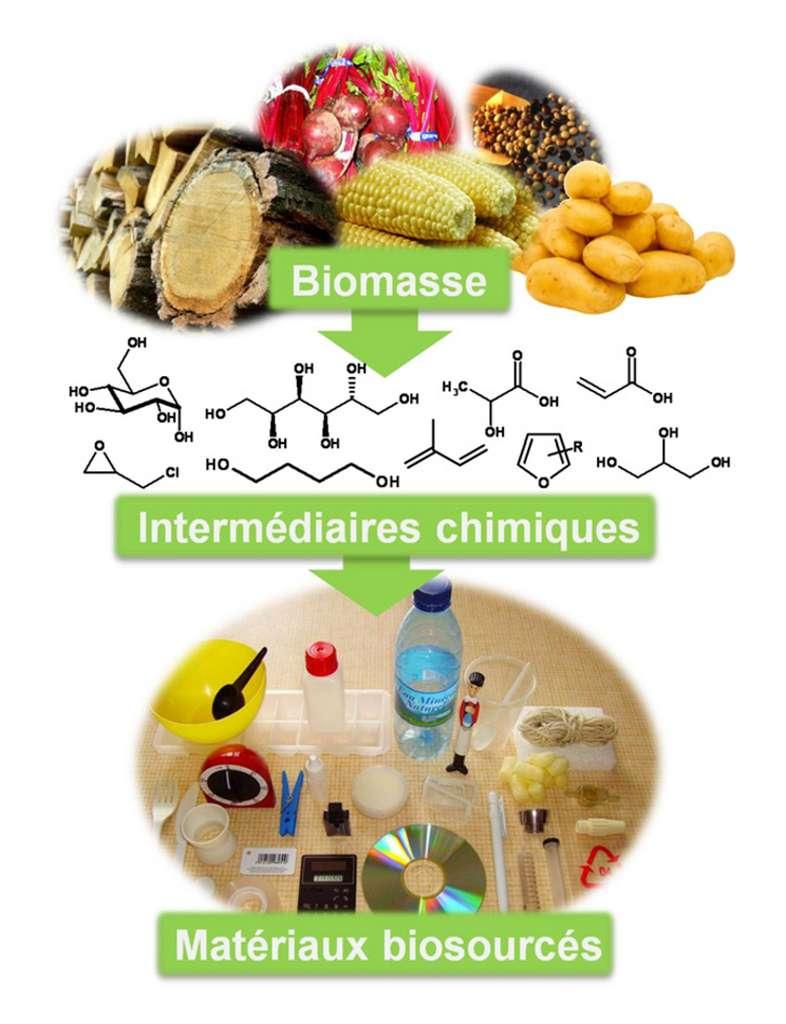 Amidon de maïs et de pommes de terre, sucre de canne à sucre, huiles d'oléagineux (arachide, soja, palmier à huile), lignocellulose de bois… la biomasse est une source précieuse de matière organique pour fabriquer des produits biosourcés très divers (plastiques, peintures, adhésifs, détergents, cosmétiques, vêtements, additifs alimentaires, médicaments…). © DR