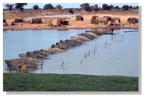 Un barrage de nasses diéné sur le mayo Dembé, près de Mopti. Delta Central du Niger. Mali. © IRD/Yveline Poncet.