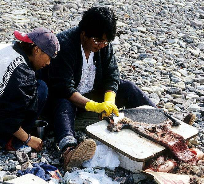 Inuits raclant une peau de phoque barbu. © Ansgar Walk, CCA-SA 3.0 Unported license