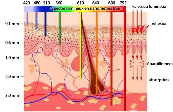 Ce schéma indique la profondeur de pénétration dans la peau des ondes lumineuses. On voit qu'il faut aller dans le proche infrarouge, au-delà des longueurs d'onde de 0,7 micromètre, pour traiter des tumeurs sous la peau avec la PDT. © ULg