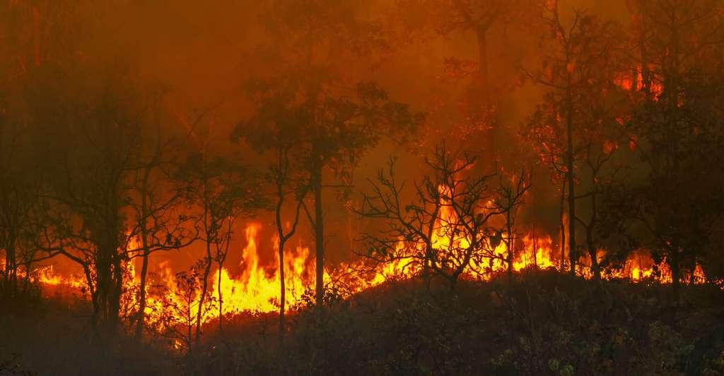 Entre déforestation et méga-incendie, les forêts ne jouent plus leur rôle. © toa555, Adobe Stock