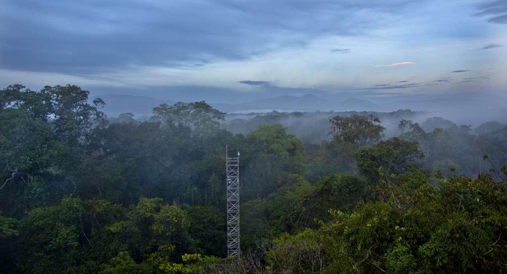 Carlos de la Rosa dirige la station biologique de La Selva au Costa Rica, dans une forêt tropicale humide de moyenne altitude où il a vu une abeille et un papillon boire les larmes d'un caïman. © Carlos de la Rosa