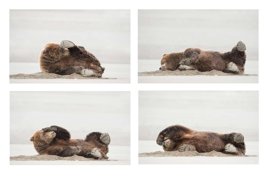 « Deadly Fart. » © Daisy Gilardini, Comedy Wildlife Photography Awards 2020