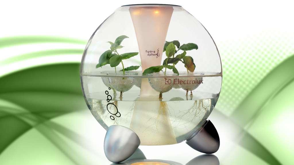 L'hydrosphère pour cultiver ses plantes