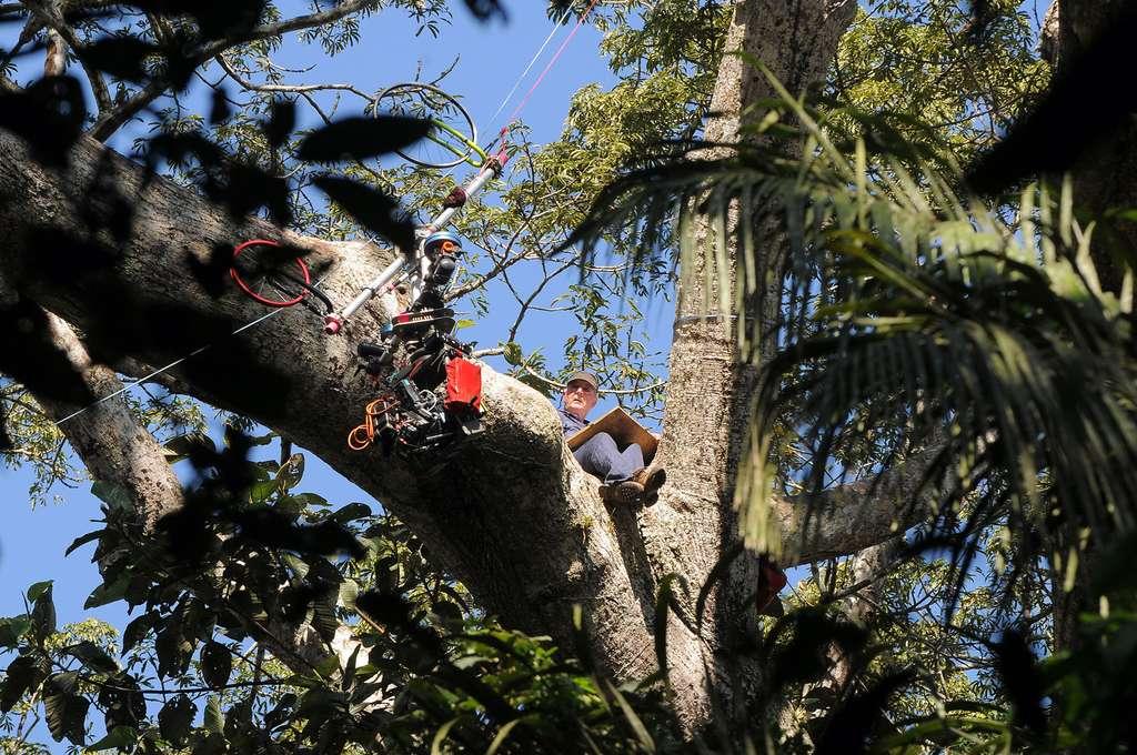Au cours du documentaire, on peut apercevoir Francis Hallé assis sur les branches en train de dessiner les arbres. © Sarah Del Ben, Wild-Touch, 2013