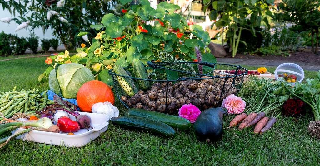 Le bonheur de la récolte des produits maison. © Zebra7 CC0, domaine public