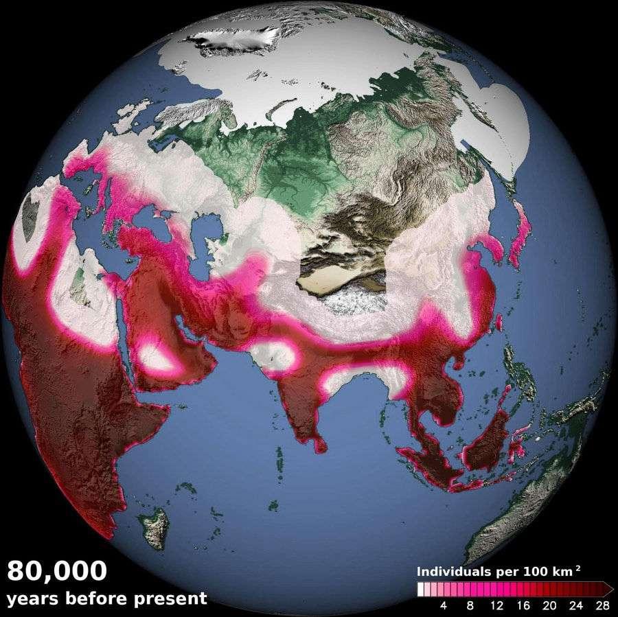 La densité des populations humaines, indiquée par la couleur (en individus par 100 km2) il y a 80.000 ans, d'après un modèle de migration qui tient compte du climat. Il montre le voyage d'Homo sapiens depuis l'Afrique, en passant par la péninsule arabique et en longeant les côtes jusqu'à l'Asie du sud-est et l'Australie. © Tobias Friedrich