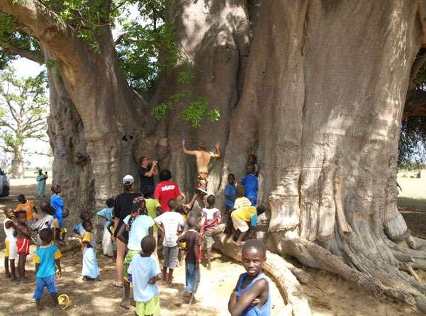 L'étude du baobab sacré de Nianing suscite la curiosité des enfants. © Sébastien Garnaud