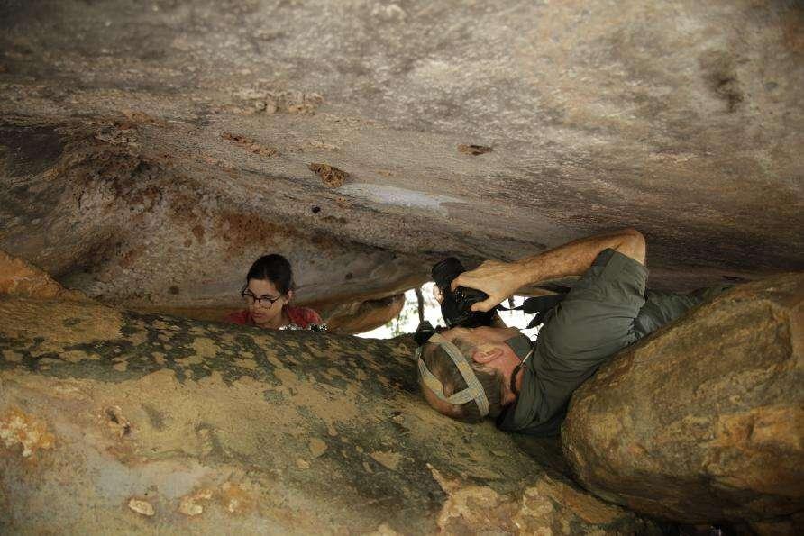 La peinture d'un kangourou a été trouvée, bien protégée par d'anciens nids de guêpes, sur le plafond d'un abri sous-roche. © Damien Finch