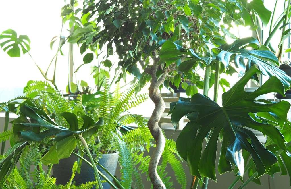 Un beau jardin dans son appartement, c'est possible, en fournissant le bon substrat à ses plantes d'intérieur. © Sergey, Adobe stock
