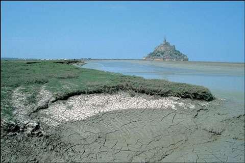 La faune du Mont-Saint-Michel est très riche. © Daniel Fondimare - Tous droits de reproduction interdits