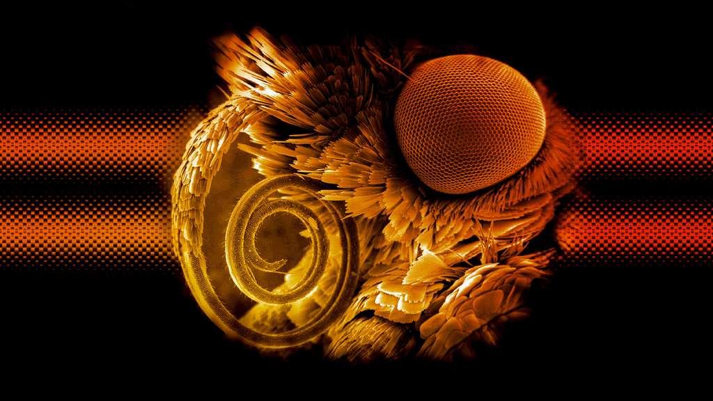 La trompe d'une pyrale vue au microscope électronique