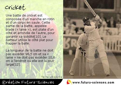 Le cricket