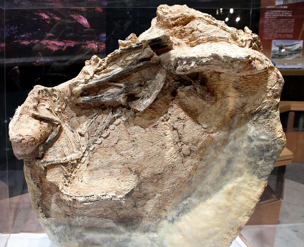 Fossile de Guanlong wucaii
