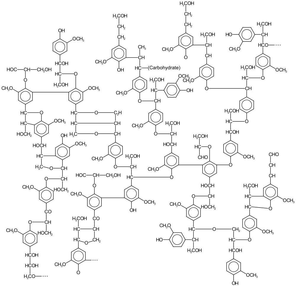 La lignine est un polymère à la structure complexe notamment employé dans l'industrie papetière. © Karol Głąb, Wikimedia Commons, cc by sa 3.0