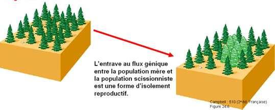 Adapté d'après Campbell N. A et Reece J. B., 2004 - Biologie - 2ème édition française. De Boeck Université © Tous droits de reproduction réservés