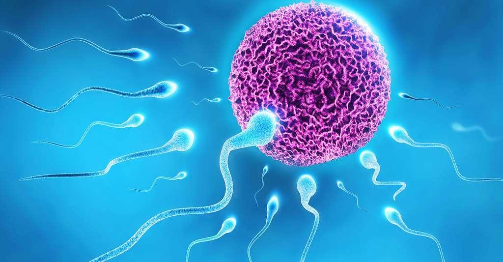 Spermatozoïdes entourant un ovule juste avant la fécondation. © Razvan Ionut Dragomirescu, Shutterstock