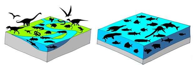 Schémas montrant des silhouettes des principaux groupes de vertébrés du Cénomanien en milieux terrestre et d'eau douce (gauche) et en milieu marin (droite). © DR