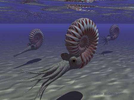 Des ammonites dans les océans du Crétacé. Crédit : Dr. Ken Hooper/Virtual Natural History Museum Ottawa-Carleton Geoscience Centre