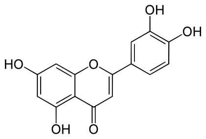 L'action anti-inflammatoire de la lutéoline, une molécule de la famille des polyphénols, permettrait d'améliorer la mémoire spatiale des souris âgées. © DR