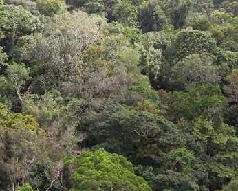 La forêt tropicale humide accueille une biodiversité de plantes vasculaires très riche, mais sur des petites échelles, le nombre d'espèces par unité de surface n'est pas si important que cela. © M. Pärtel, 2006