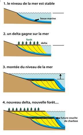 Figure 23 : Coupe schématique de la formation de charbon dans des deltas marins subissant des variations cycliques du niveau de la mer (les « cyclothèmes charbonniers »).