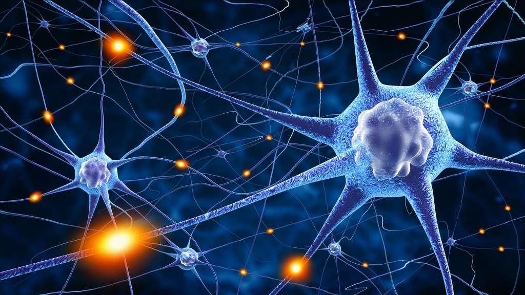 La nicotine se fixe sur les récepteurs nicotiniques des neurones. © adimas, Fotolia
