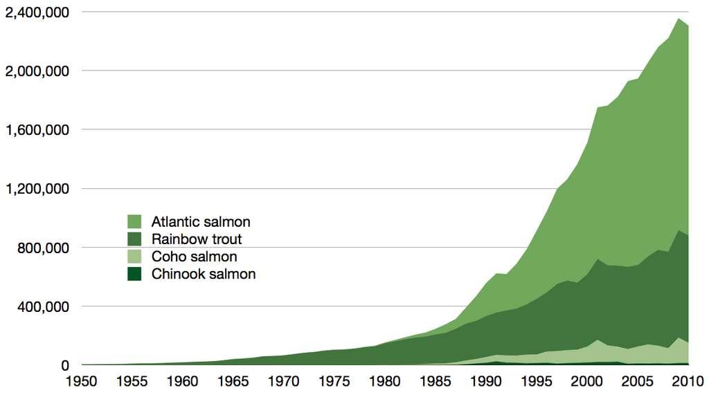 Production aquacole mondiale d'espèces de salmonidés en tonnes, 1950-2010, telle que rapportée par la FAO. Il a fallu en pêcher du poisson pour nourrir une telle quantité de carnivores ! © Epipelagique, Wikimedia commons, CC 3.0