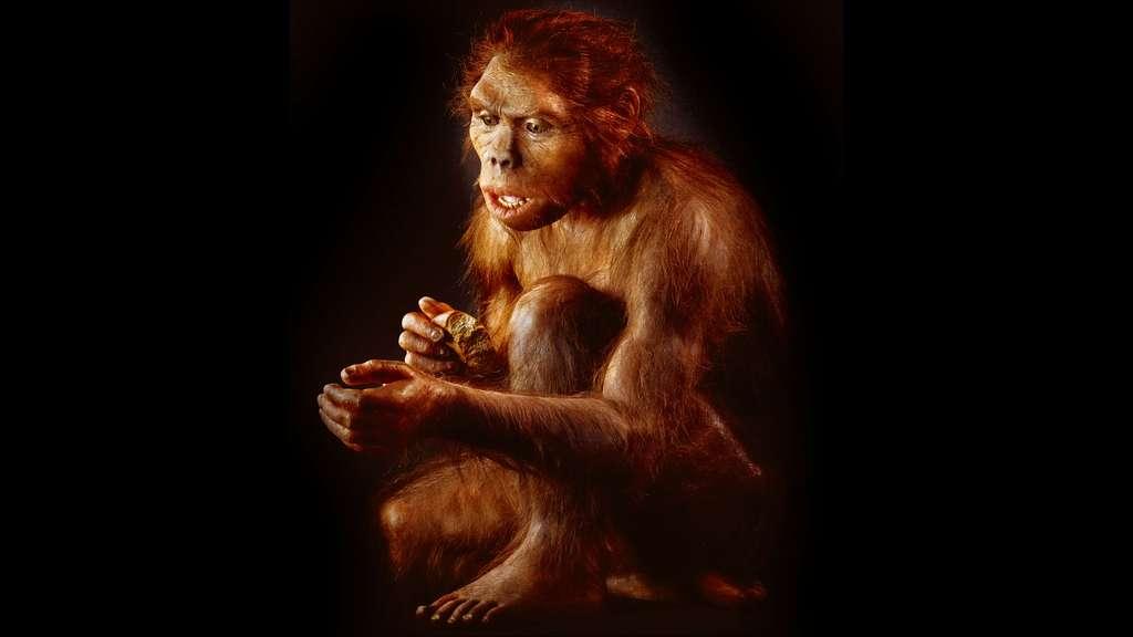 Premier représentant officiel du genre humain, voici Homo habilis, l'« Homme habile », ici représenté par une femelle ! Il fut ainsi nommé parce qu'il avait été trouvé non loin d'outils, dont on sait aujourd'hui qu'ils ne sont aucunement le propre de l'homme. © Dunod, tous droits réservés