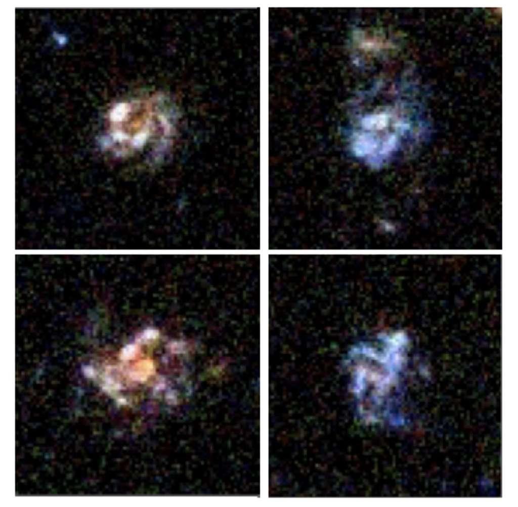 Images en couleurs composites obtenues avec le télescope spatial Hubble de quatre galaxies à grumeaux formant des étoiles, à une époque de trois milliards d'années suivant le Big Bang. © G. Barro, Nasa, ESA