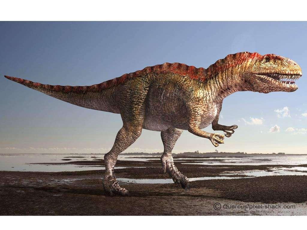 L'acrocanthosaure, ou Acrocanthosaurus, l'un des plus grands théropodes