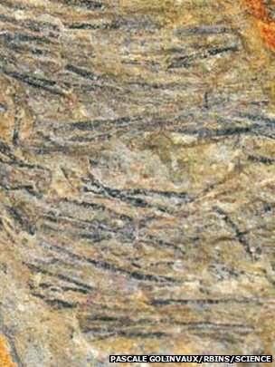 Les filaments noirs que l'on voit ici semblent être des restes fossilisés de plumes primitives, les premières associées à un dinosaure herbivore. © Pascale Golinvaux (RBINS), Science