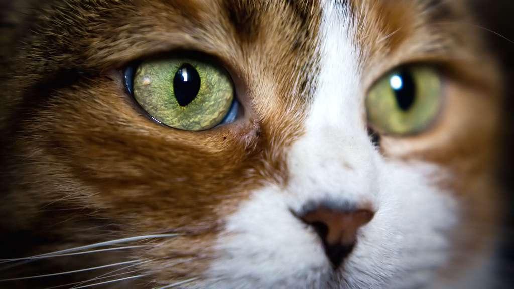 La grande souplesse du chat