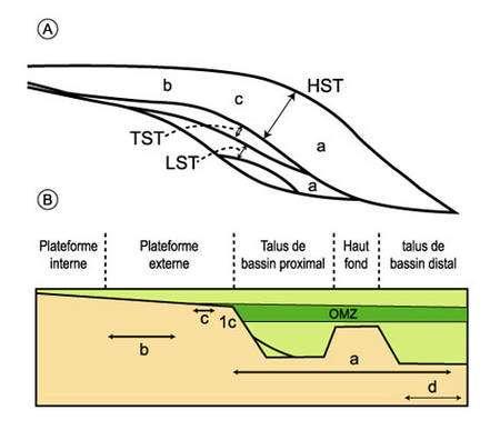 Séquence de dépôt liée aux upwellings (A) et distribution des divers faciès siliceux (B), à partir des dépôts néogènes du Pacifique (d'après Garrison, 1992). a : porcelanites finement litées (HST et LST) ; b : dépôts siliceux massifs (HST) ; c : alternance de roches massives et laminées, paraséquence en HST ; d : cherts, faciès de bassin distal ; OMZ : zone à minimum d'oxygène ; LST : lowstand system tract ; TST : transgressive system tract ; HST : highstand system tract.