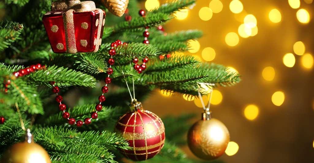 Il existe plusieurs types de sapins de Noël. Le sapin Nordmann est le préféré des Français. © Africa Studio, Shutterstock