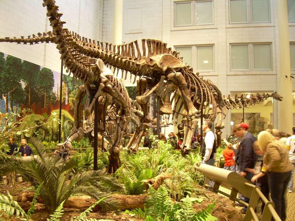 Un Allosaurus fragilis à la poursuite d'un Apatosaurus louisæ au sein du musée de Carnegie. Ce dinosaure herbivore pouvait atteindre une longueur de 22 mètres et devait peser environ 20 tonnes. © Kordite, Flickr, CC by-nc 2.0