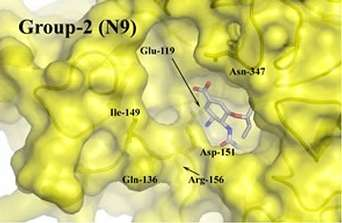 Le site actif de la forme N1 de la neuraminidase présente une cavité que ne comporte pas d'autres variantes (Courtesy of Skehel et al)