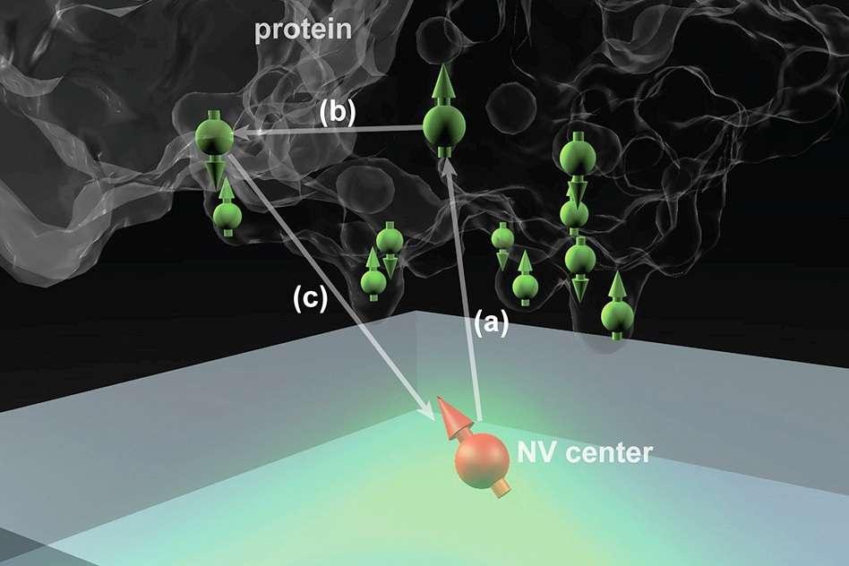 Le centre coloré NV d'un diamant peut être utilisé comme sonde quantique sensible aux états de spins (flèches vertes) et aux positions des atomes dans la protéine. La mesure de l'état de spin (flèche orange) du centre NV permet alors de déterminer ces positions. © MIT