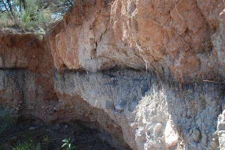 Cliquez pour agrandir. A Murray Springs, en Arizona, on voit nettement la couche sombre contenant des nanodiamants. La chute des fragments de comète aurait aussi déclenché plusieurs incendies importants, générateurs de suies. Crédit : University of Oregon