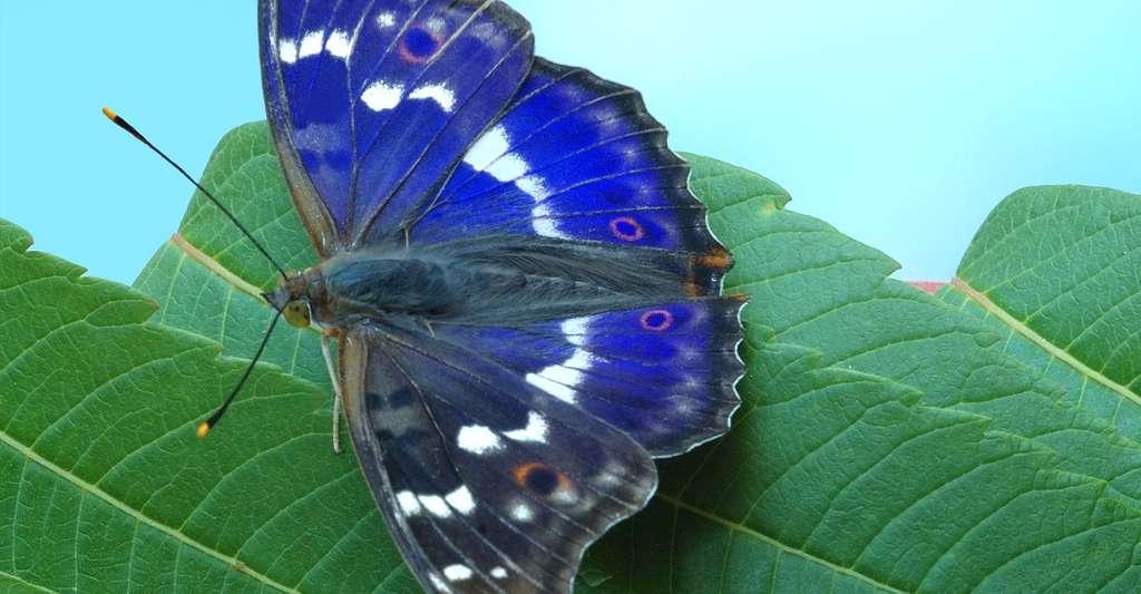 La couleur magnifique des papillons. © Alslutsky, Shutterstock