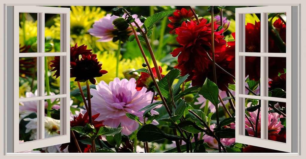 Fenêtre ouverte sur un jardin fleuri. © Schueler-Design, DP