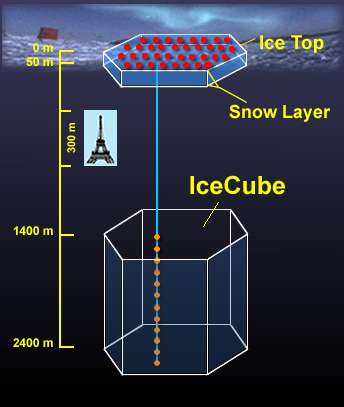 IceCube sera un détecteur géant, ce schéma donne une idée de sa taille par rapport à la Tour Eiffel. Crédit : Kara Hoffman