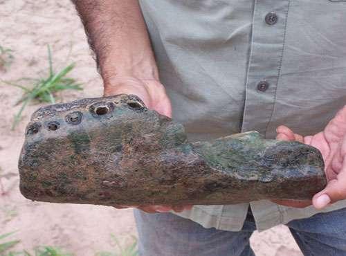 Expédition Fitzcarrald 2005, fragment de mâchoire fossile du caïman Purussaurus. © P.O. Antoine Reproduction et utilisation interdites