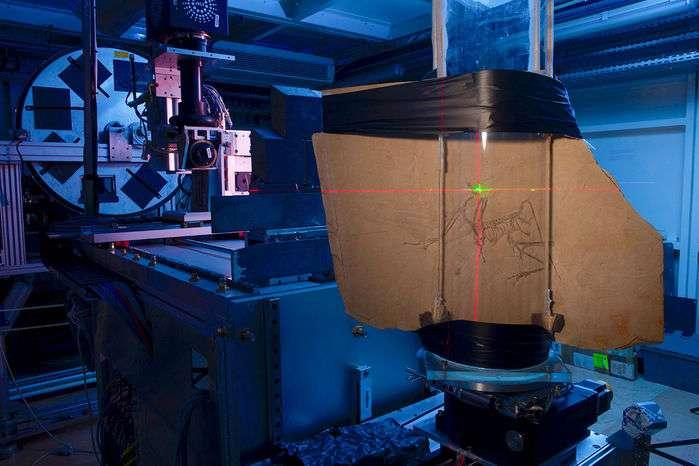 Le spécimen d'archéoptéryx du musée de Munich à la ligne de faisceau ID19 à l'ESRF. La plaque de calcaire a été montée sur un étage d'échantillonnage rotatif et est orientée en pointant sur le crâne des lasers. Le faisceau de rayons X, venant de la droite de l'image, traverse l'échantillon et arrive au détecteur (visible à gauche) où une caméra enregistre le signal. © Pascal Goetgheluck