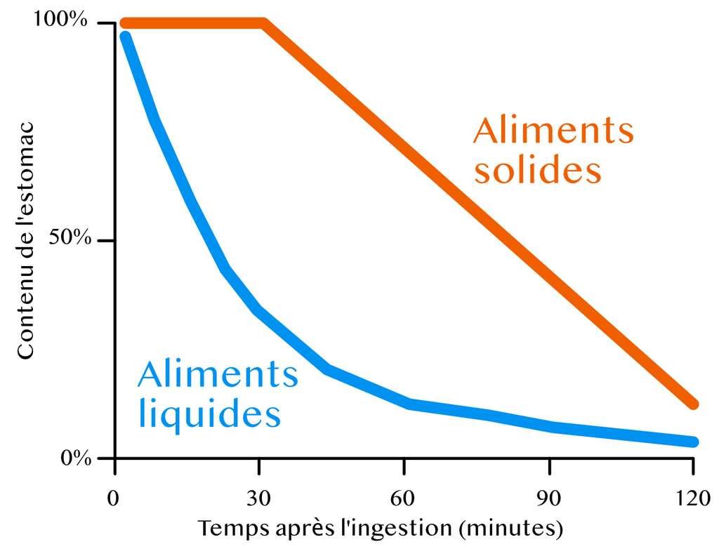 Les aliments liquides sont plus rapidement digérés par l'estomac que les aliments solides. © C.D pour Futura