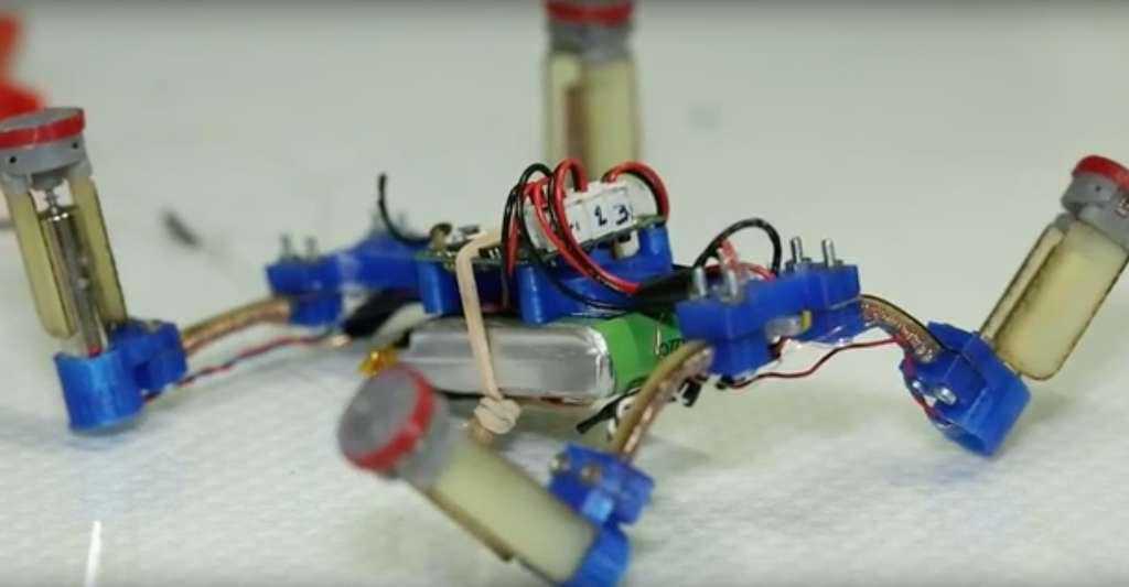 Le fil composite conçu par les chercheurs de l'École polytechnique fédérale de Lausanne pourrait aider à mettre au point des robots capables de changer de forme. Ici, il compose le lien entre le corps et les pattes du robot. © EPFL, YouTube