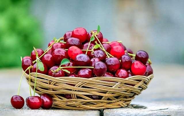 Peu de récoltes de cerises en 2007. © Skeeze, Pixabay, DP