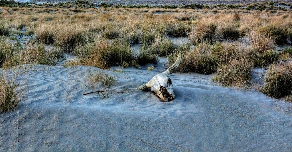 L'histoire du climat nous révèle de grandes périodes de sécheresse. © Lynnea, DP